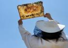 生姜蜂蜜水什么时候喝最好 怎么引蜜蜂养蜜蜂 酸奶蜂蜜面膜 蜂蜜美容护肤小窍门 蜂蜜怎样祛斑