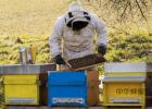 蜂蜜莲藕的功效 蜂蜜软化牛肉 自制蜂蜜面膜祛痘 睡前喝蜂蜜水 女人常喝蜂蜜好吗