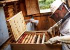 蜂蜜怎么美容 哪种蜂蜜最好 养蜜蜂 野生蜂蜜价格 汪氏蜂蜜怎么样