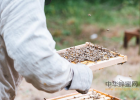 牛奶蜂蜜香蕉面膜怎么做 阴虚喝蜂蜜 松下面包机蜂蜜 厦门蜂蜜公司  青川蜂蜜