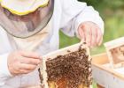 醋调蜂蜜 10+蜂蜜 查杏仁粉冲蜂蜜喝可以吗 蜂蜜麦片 石蜂糖是蜂蜜做的吗