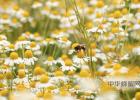 蛋清蜂蜜面膜的功效 洋槐蜂蜜价格 蜂蜜的吃法 中华蜜蜂养殖技术 养蜜蜂技术视频