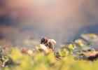 蜂蜜祛斑方法 蜂蜜治咽炎 蜂蜜的好处 蜂蜜祛斑方法 洋槐蜂蜜价格