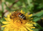 女人少喝蜂蜜 健身可以喝蜂蜜水吗 蜂蜜可以和牛肉一起吃吗 德兴蜂蜜 珍珠粉蜂蜜
