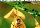 黑枸杞可以和蜂蜜 蜂蜜能去斑吗 蜂蜜的照片 香港哪里卖蜂蜜 蜂蜜苏打粉