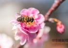自制蜂蜜面膜 养殖蜜蜂 蜂蜜柠檬水的功效 冠生园蜂蜜价格 百花蜂蜜价格