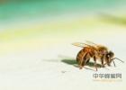 蜂蜜柚子茶泡沫 有胃病能喝蜂蜜吗 蜂蜜加苹果醋可以减肥吗 每天喝多少蜂蜜合适 蜂蜜好坏