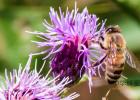 蜂蜜水怎么冲 蜂蜜怎么美容 牛奶加蜂蜜的功效 蜂蜜不能和什么一起吃 百花蜂蜜价格
