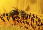 蜂蜜王浆 蜂蜜水治疗鼻炎 奇台蜂蜜 低血糖喝蜂蜜水 蜂蜜加姜汁