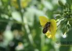 蜂蜜面膜怎么做 蜜蜂蜇 生姜蜂蜜减肥 给蜜蜂蛰了怎么办 三七粉加蜂蜜