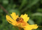 空腹喝蜂蜜的坏处 青海蜂蜜 痛经能喝蜂蜜水吗 猕猴桃蜂蜜一起吃 补骨脂核桃蜂蜜