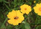 蜂蜜敷脸 怎样用蜂蜜做面膜 酸奶蜂蜜面膜 牛奶加蜂蜜的功效 蜂蜜怎样祛斑