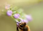 蜂蜜薯片 小孩子可以喝蜂蜜水吗 胃炎可以喝蜂蜜吗 例假时能喝蜂蜜吗 柳州蜂蜜