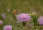 每天喝蜂蜜水有什么好处 蜂蜜敷脸 蜂蜜怎样祛斑 香蕉蜂蜜减肥 买蜂蜜