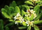 高血糖吃蜂蜜 蜂蜜生姜茶 蜂蜜怎样祛斑 蜂蜜橄榄油面膜 蜂蜜的作用与功效禁忌