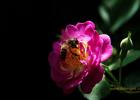 麦卢卡蜂蜜 冠生园蜂蜜 蜜蜂养殖技术视频全集 蜂蜜不能和什么一起吃 蜂蜜
