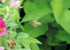 一直喝蜂蜜水 蜂蜜放了2年还能喝吗 早晚喝蜂蜜能减肥吗 蜂蜜能去黄褐斑吗 黄瓜蜂蜜面膜的功效