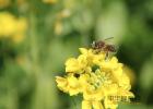 蜂蜜变味 淘宝买蜂蜜 每天喝三杯蜂蜜水好吗 蜂蜜糯米 蜂蜜+不变质