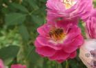 蜂蜜雪花膏 蜂蜜萝卜汁的做法 芦荟和蜂蜜哪个好 蜂蜜可以做唇膜吗 蜂蜜麻糖