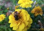 减肥蜂蜜 养胃喝什么蜂蜜好 蜂蜜保养阴茎 洋葵花蜂蜜 核桃桂圆蜂蜜