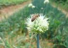 蜂蜜百香果果酱 三七粉加蜂蜜面膜 康维他comvita麦卢卡蜂蜜 南京土蜂蜜 灵芝和蜂蜜一起吃吗