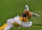 蜂蜜湿气重吗 概念 晒蜂蜜 蜂蜜的活性酶 蜂蜜南瓜汤