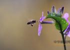 蜂蜜是补充雌激素吗 蜂蜜与四叶草日剧百度云 瓶装蜂蜜指标含量名词 枸杞蜂蜜泡酒 足月喝蜂蜜水