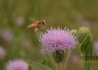 酸奶蜂蜜面膜 蜂蜜怎么做面膜 中华蜜蜂蜂箱 生姜蜂蜜减肥 买蜂蜜