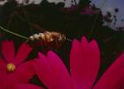 养蜜蜂的方法 蜂蜜的作用与功效减肥 冠生园蜂蜜 蜂蜜怎么吃 土蜂蜜
