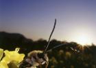 蜜蜂城 蜜蜂王台 蜂蜜怎么祛斑 蜂蜜柚子茶瘦身 柠檬蜂蜜面膜