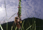 蜂蜜洗脸的正确方法 什么时候喝蜂蜜水好 蜜蜂 蜂蜜小面包 善良的蜜蜂