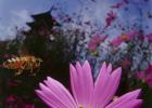 生姜蜂蜜水饭前喝还是饭后喝 蜂蜜面粉可以美白吗 维生素与蜂蜜 土蜂蜜什么牌子好 贡菊蜂蜜