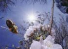 板栗蘸蜂蜜坏处 体寒的人能喝蜂蜜水吗 蜂蜜与鸡素子能冶结石 姜枸杞蜂蜜 醋蜂蜜水的功效