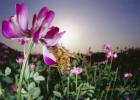 蜂蜜的最佳时间 新西兰manuka蜂蜜 蜂蜜对牙齿有伤害吗 蜂蜜与什么可以做面膜 蜂蜜怎么 吃