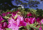 萝卜泡蜂蜜怎么泡 有机蜂蜜 饥荒蜂蜜炸弹 蜂蜜大麻花 蜂蜜上面一层蜡