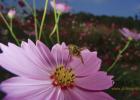 bee2蜂蜜 绿茶生姜蜂蜜减肥 蜂蜜柚子茶的做法 做蜂蜜蛋糕的视频 蜂蜜桂花糖藕