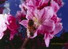 注册蜂蜜品牌 蜂蜜珍珠粉 蜂蜜吃什么好 2岁半能喝蜂蜜水吗 黑枣蜂蜜