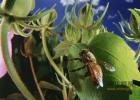 胃酸多能吃蜂蜜吗 蜂蜜蒜头 鸭蛋和蜂蜜 蜂蜜类目 怀孕喝什么蜂蜜好