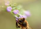 蜂蜜美容 用茶蜂蜜真假 蜂蜜是怎么做出来的 鸿香源蜂蜜好吗 干柠檬片加蜂蜜泡水