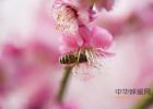 蜂蜜洗脸的正确方法 养蜜蜂 生姜蜂蜜祛斑 酸奶蜂蜜面膜 蜂蜜的副作用