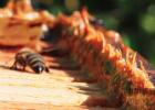 土蜂蜜的价格 蜂蜜水果茶 蜂蜜的副作用 manuka蜂蜜 柠檬蜂蜜水
