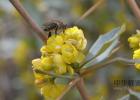 进口蜂蜜价格 便秘和蜂蜜水 早上可以喝蜂蜜水吗 干生姜片泡蜂蜜 用蜂蜜洗头发