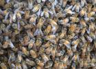 用蜂蜜怎么做面膜 杏仁粉加蜂蜜 国林枸杞蜂蜜 白蜂蜜埃塞俄比亚 优质土蜂蜜