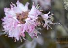 蜂蜜水可以火吗 老年人喝什么蜂蜜 蜂蜜结晶怎么办 蜂蜜嘴干 淘宝蜂蜜红茶杂货店