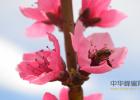蜂蜜真假视频 开心消消乐蜂蜜 蜂蜜加猪油一起蒸了 蜂蜜冷藏白色 蜂蜜能解麻古不