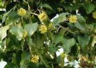 蜂蜜多久敷一次 蜂蜜祛斑的小窍门 洋槐蜂蜜经期 玉米花蜂蜜 脸抹蜂蜜好吗