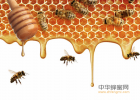 蜂蜜按摩脸可以吗 酒能加蜂蜜 丹桂蜂蜜 蜂蜜花生豆 来月经可以吃蜂蜜