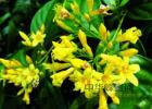 冠生园蜂蜜 蜂蜜 蜂蜜怎么美容 蚂蚁与蜜蜂漫画全集 蜂蜜橄榄油面膜