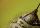 蜜蜂养殖技术 蜂蜜小面包 蜂蜜加醋的作用 土蜂蜜 自制蜂蜜柚子茶