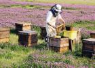 张仲景蜂蜜治便秘 蜂蜜中的沉淀 蜂蜜在冷冻时候的图片 蜂蜜泡酒 珍珠粉蜂蜜